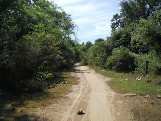 田舎道.jpg